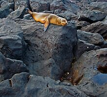 Sea Lion9 by bulljup