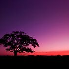 My New Tree - Maclean Qld Australia by Beth  Wode