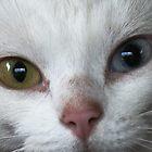 ABC Cat ( A Bi-Coloured Cat) by patjila