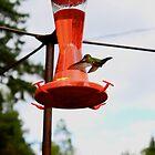 HummingBird by Dan Forpahl