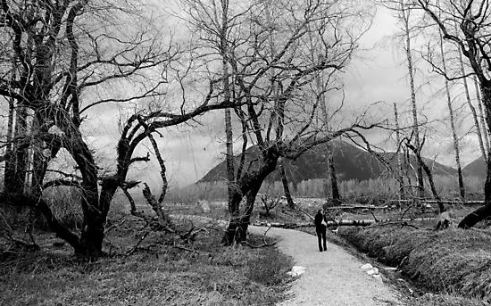 Forest Trail by kendlesixx
