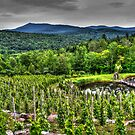 The Grape Vines_HDR by Paul Kepron - ÐΛRКSIDΞR