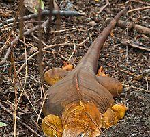 Land Iguana30 by bulljup