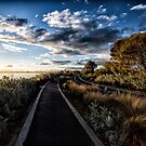 Two way path by Adriano Carrideo