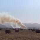 Cosecha y quema by DCFotos