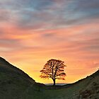 Sycamore Tree on Hadrian's Wall by Joan Thirlaway