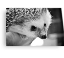 Hedgehog Love Canvas Print