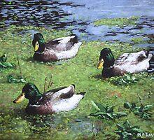 three mallard ducks in pond by martyee