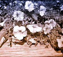infrared flowers by Wendy  Rauw