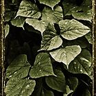 Compositions with Leaves by DFLC Prints
