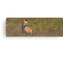 Foxy Panorama Canvas Print