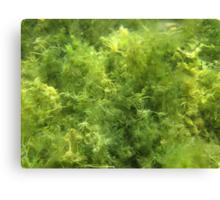 Underwater Vegetation 515 Canvas Print