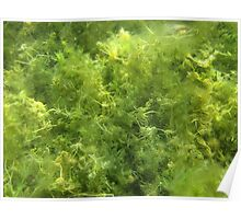 Underwater Vegetation 515 Poster