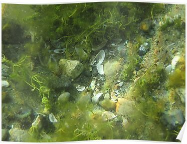 Underwater Vegetation 520 by Thomas Murphy