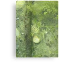 Seaweed Chicken Monster Metal Print