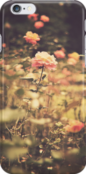 One Rose in a Magic Garden (Vintage Flower Photography) by Andreka