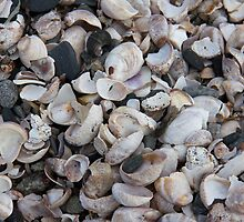 Sea Shells by jeffreynelsd