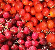 Cherry Tomato  by Paul Pasco