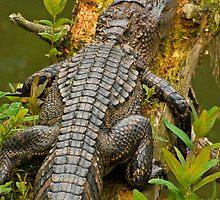 Gator iphone by imagetj