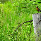 Robin on a post by Amanda Reed