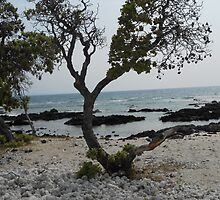 Island Tree by hrunbike