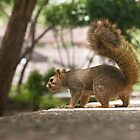 Overly Friendly Squirrel by jeffreynelsd
