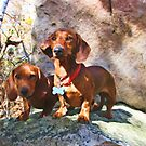 Buddy and Peanut on Rib Mountain by VJSheldon