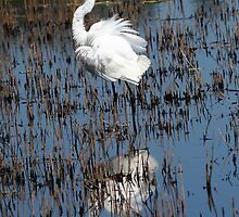 Great Egret  by Nikki25
