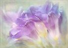 softly softly freesias by Teresa Pople