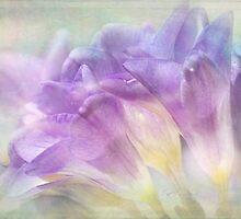 softly softly freesias by Teresa Pople