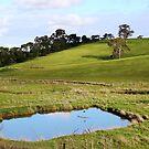 Flaxley, South Australia by Michael Humphrys
