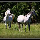 El Corozone and Sylan El Jazz'mn her daughter by SylanPhotos