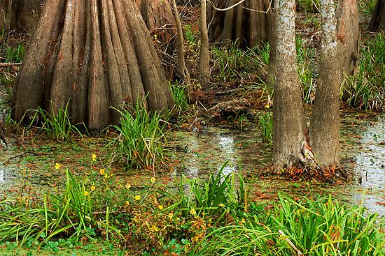 Swamp Floor, Lake Martin, Louisiana by Paul Wolf