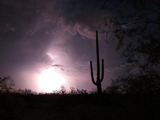Lightening Bright Saguaro   by Kimberly Chadwick