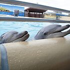 Bucky & Zippy - Pet Porpoise Pool by Joe Hupp