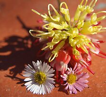 Daisies and Grevillea by kalaryder