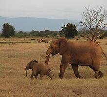Mother and Baby African Elephants by Jackie Smith