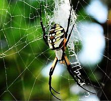 Spider by Kristen O'Brian