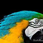 Macaw by kwill