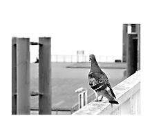 URBAN PIGEON Photographic Print