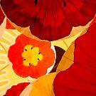 Umbrellas at the Bellagio  by Liza Cochran