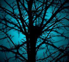 Rainy night by Liza Cochran