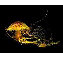 Underwater Art ~ Part Four Photographic Print