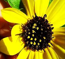 Sun Flower with Bee by nmephotography