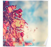 My Secret Garden (Vintage pink autumn leafs and blue sky) Poster