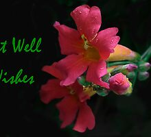 Get Well Wishes by heatherfriedman
