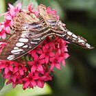 blue skipper on pentas by Linda  Makiej Photography