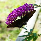 Butterfly on Flower by ThinkPics