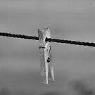 On A Wire by Janes Blond