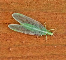 Long Green Bug by Larry Trupp